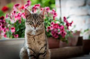 Cat by valentin19