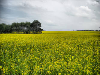 A yellow field by CrMaReLi