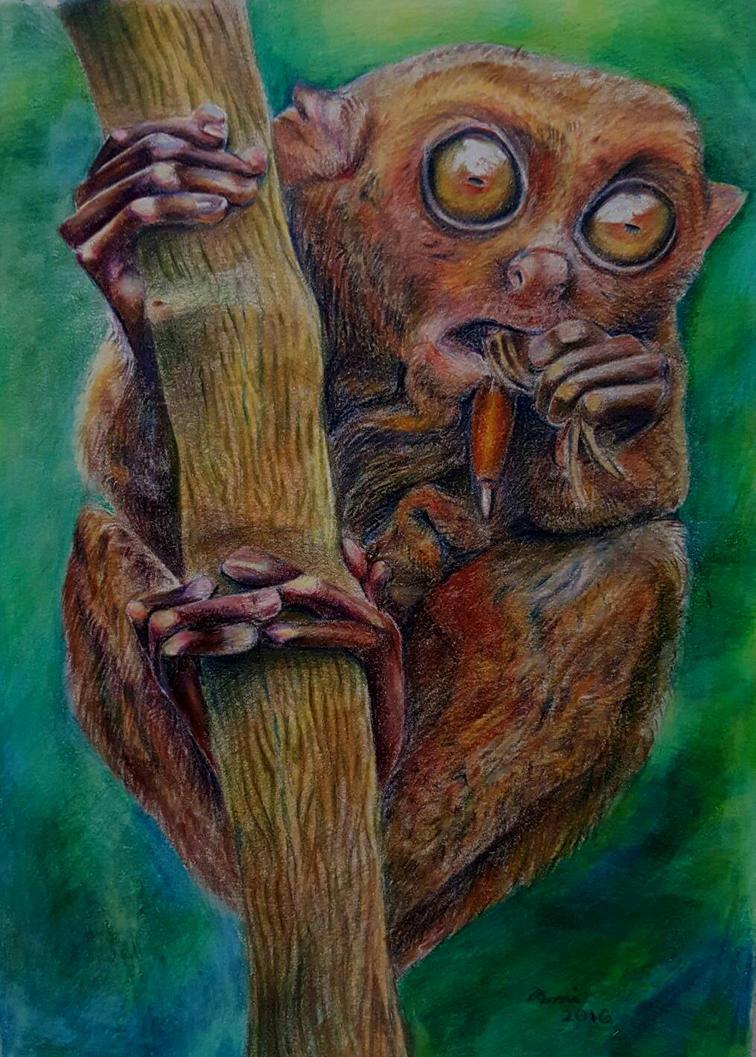 Monkey by AsmitaR