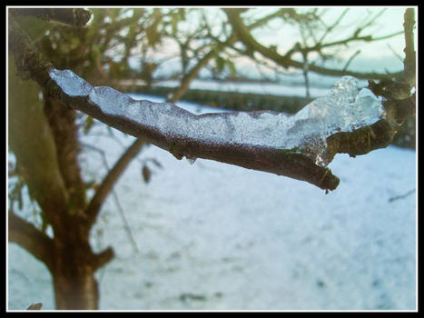 Ice on the branch
