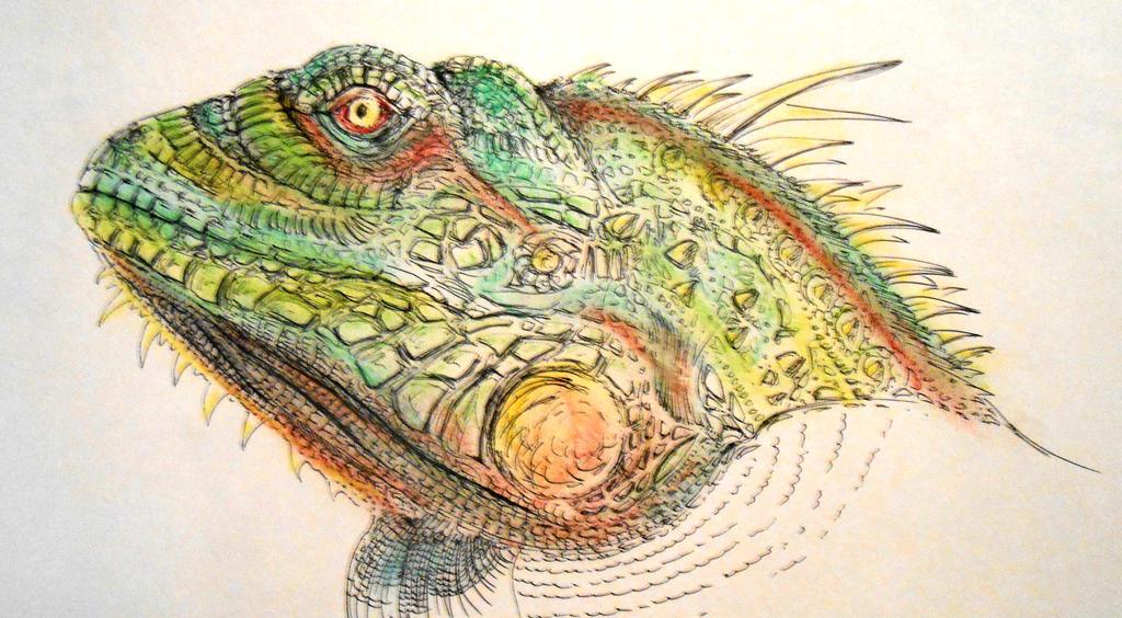 Iguane by CateSith