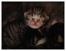 Pastel Kitty by Avalancha