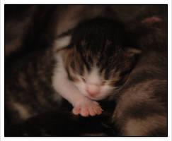 Pastel Kitty II by Avalancha