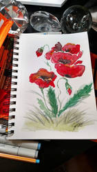 Poppies by Jerzee-Girl