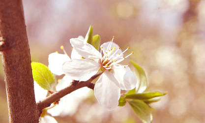 Spring has arrived by kczajkowska
