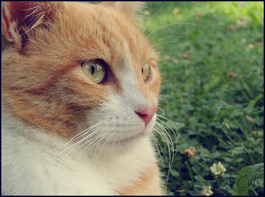 Feral Cats Make Good Pets