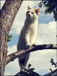 White Cat Clouds - Hope 48