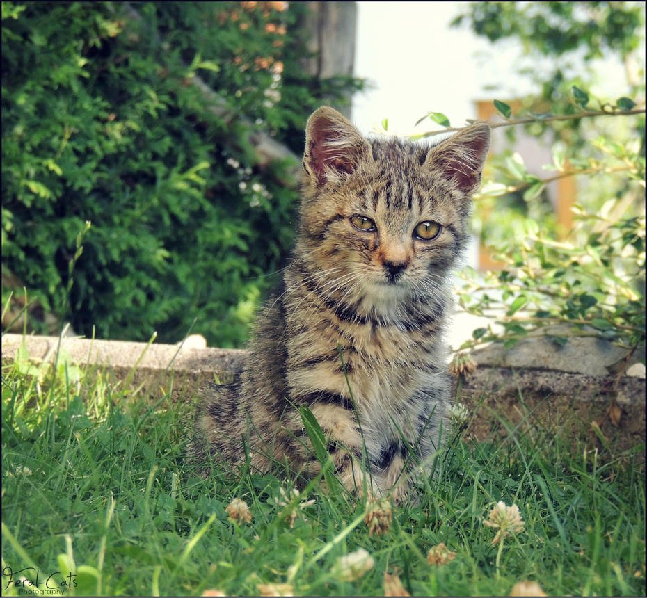 How To Get Feral Cats Taken Away
