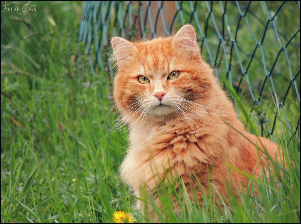 cat breed s