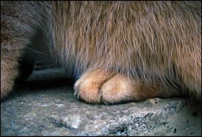 Her Golden Paw