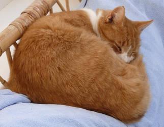 RIP Ginger by jadedlioness