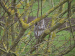 Kew Gardens: Squirrel #2