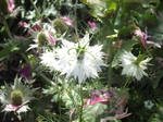 White Flower by jadedlioness