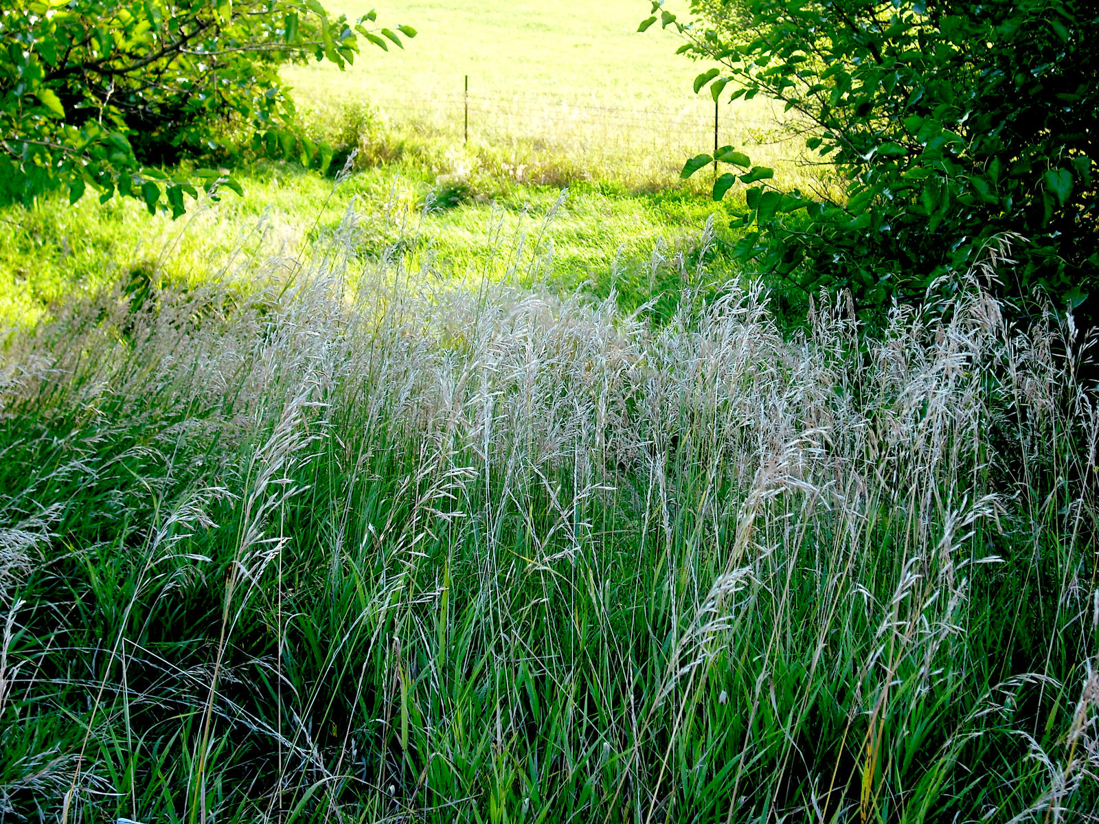 Tall grass along the road by krissybdesigns on deviantart for Long grass plants
