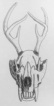 wolf skull
