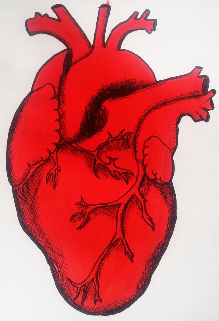 anatomical heart by itzthedave