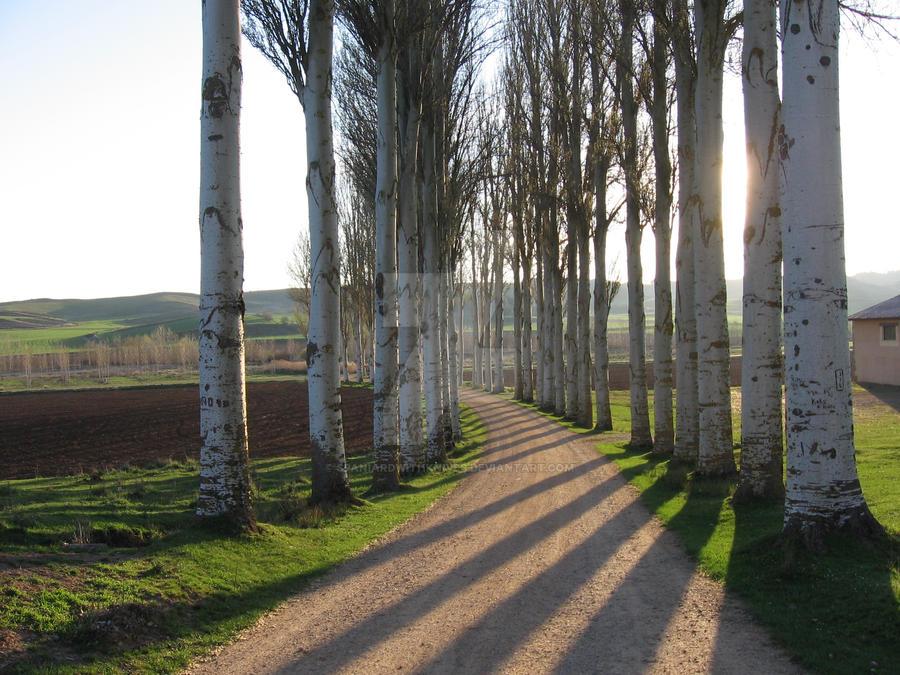 Trees by SpaniardWithKnives