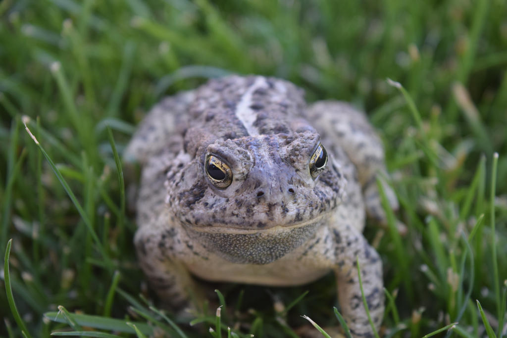 Toad by SoulsofTheDoomed