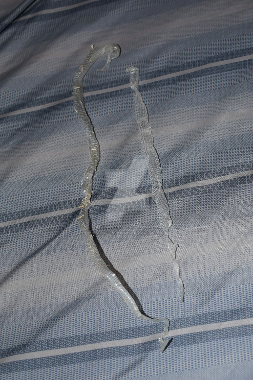 Snake Skin by SoulsofTheDoomed