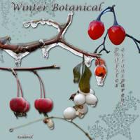 Winter botanical1 by libidules