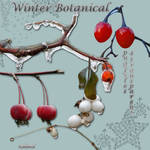 Winter botanical1