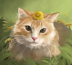 Reddit gets drawn cat
