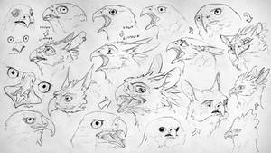 Turning birds into gryphons p1 (practice)