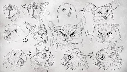 Turning birds into gryphons p3 (practice) by Rastaban26