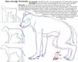 Werewolf Anatomy 101 by WolfBoy-J