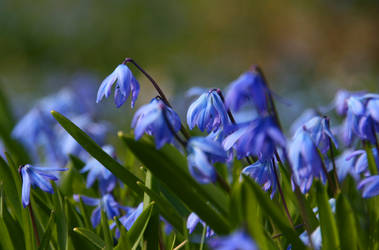 The Mourning Flowers by Munin5