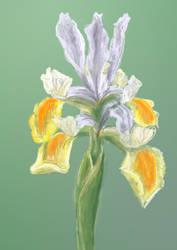 Iris by Starsong-Studio