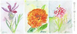 Three flower studies