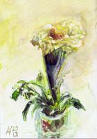 White Marigold by Starsong-Studio