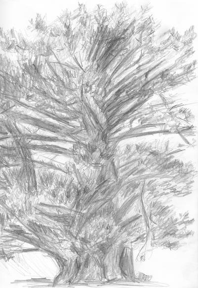 Fat pine tree by Starsong-Studio