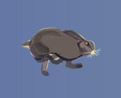 Hopping hare 1