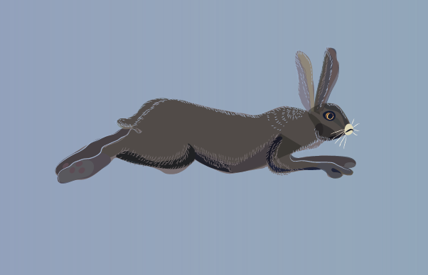 Hopping hare 2
