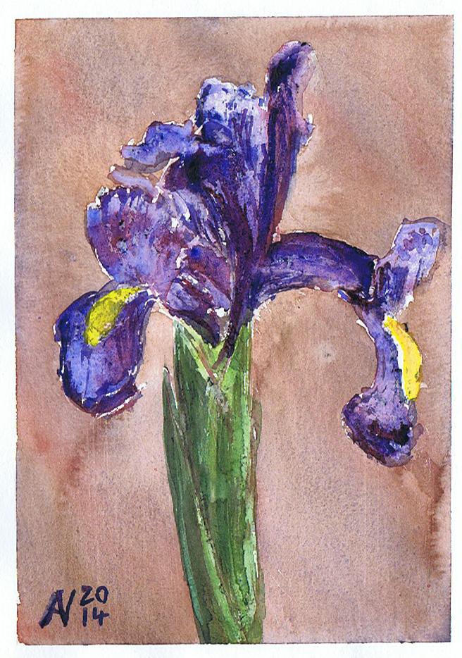 Iris again by Starsong-Studio