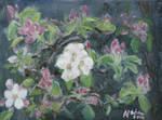 Apple Blossom, 2014