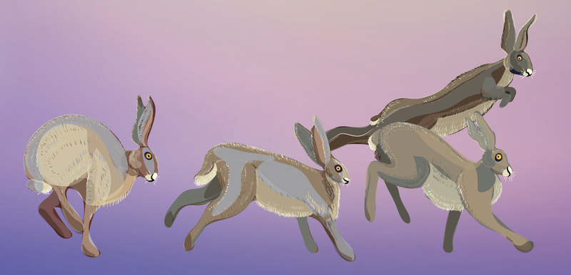Hares WIP1 by Starsong-Studio