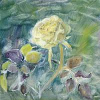 Rose 'Lemon and Lime'  (july 2015)