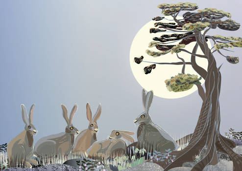 Hare story: family meeting
