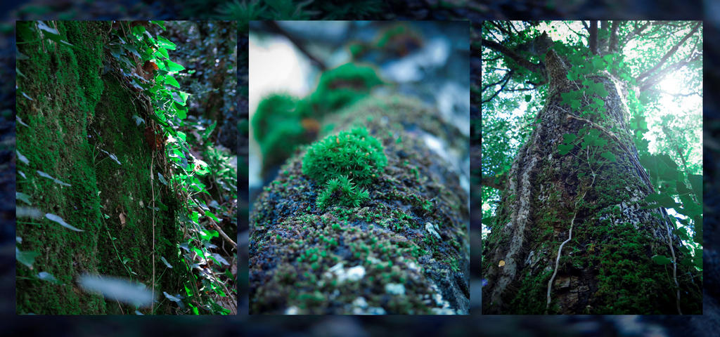 The Trees They Grow So High 4 by Gwillieth