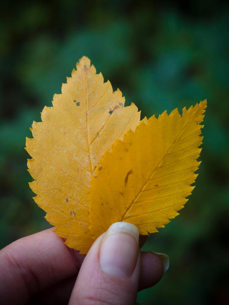 Autumn Details by Gwillieth
