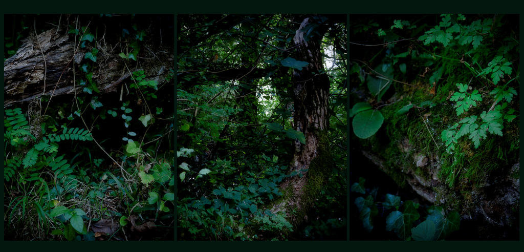 Forest Inspiration by Gwillieth
