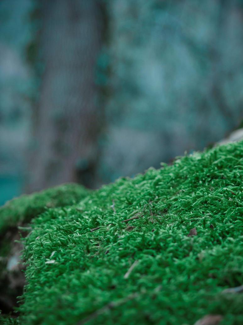 Forest Walks 5 by Gwillieth
