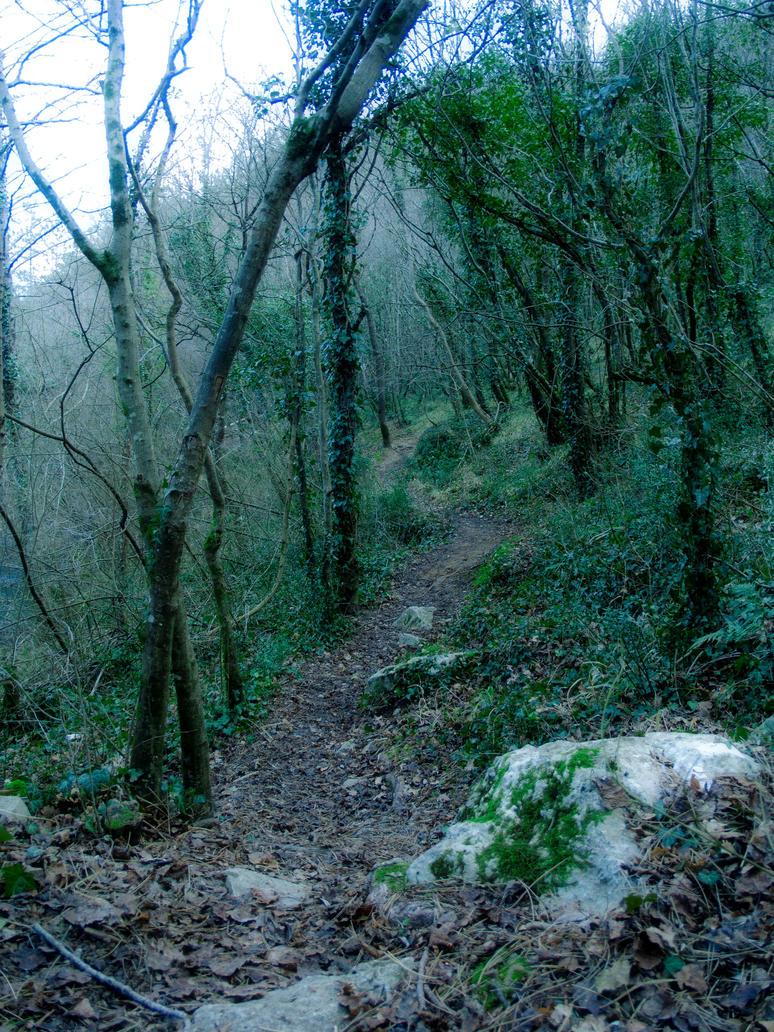 Forest Walks 2 by Gwillieth