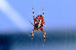 Brown spider by Peter-Gripenbark