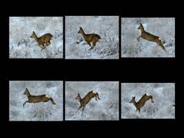 Roe deer on the run by Peter-Gripenbark
