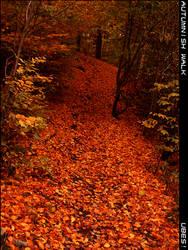 Autumnish walk by ubes