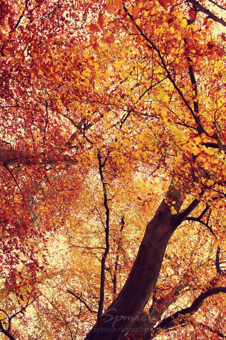Autumn by spmich